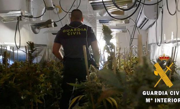 Más de 4.300 plantas de marihuana incautadas en Atarfe, Híjar, Santa Fe y Órgiva