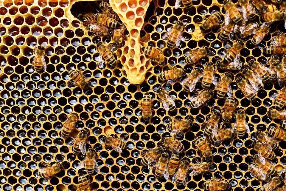 La Junta convoca ayudas de mejora de la producción y comercialización de la miel
