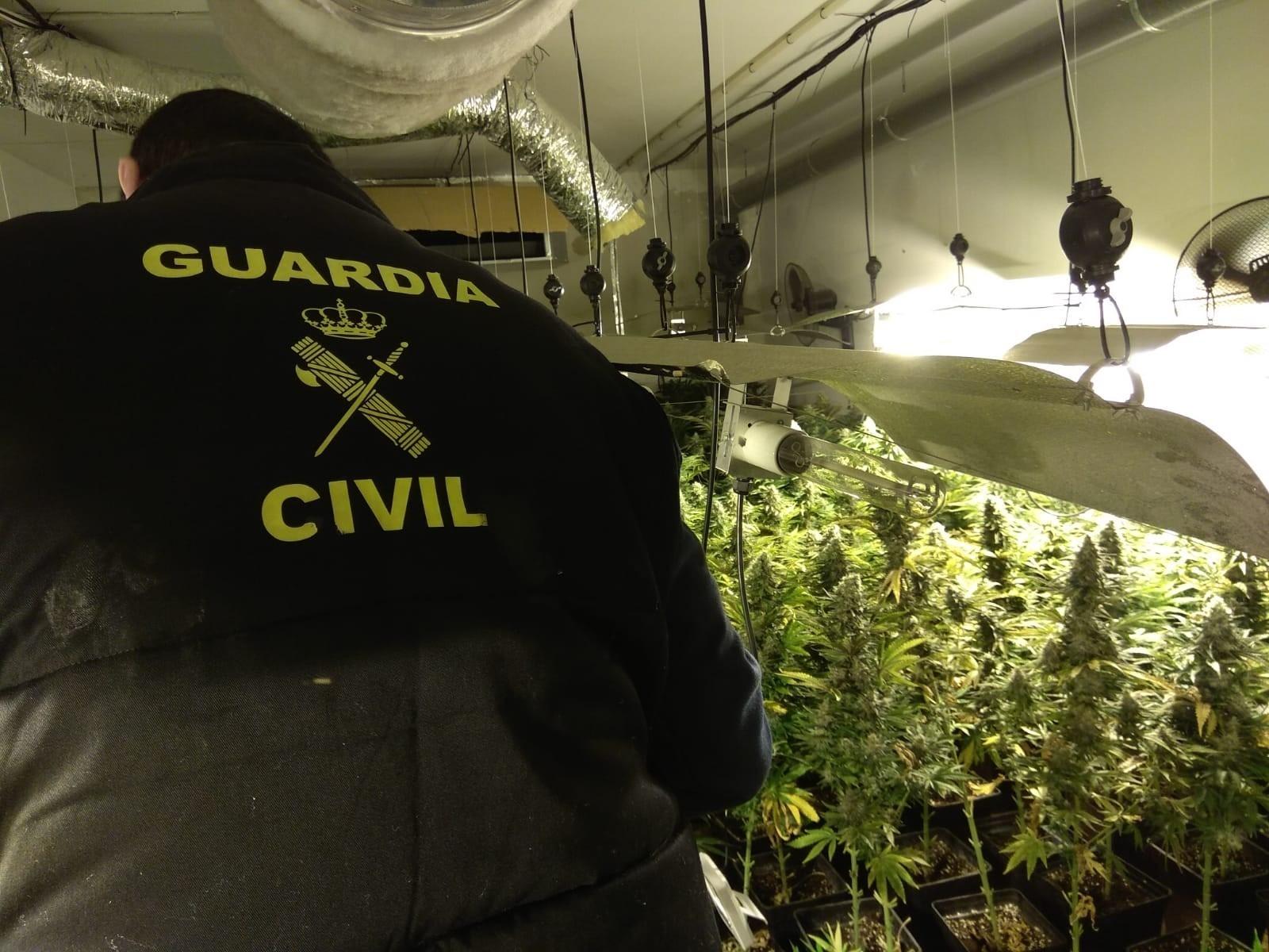 La Guardia Civil interviene 12.865 plantas de cannabis sativa en febrero