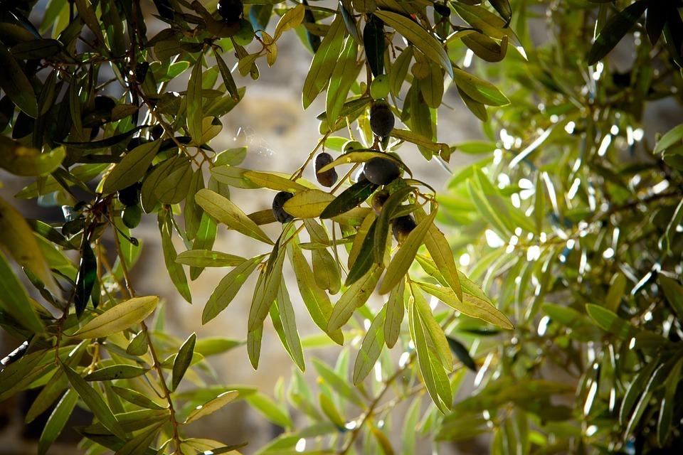 El PP reprocha que en el nuevo vídeo de la marca Sabor Granada no aparezca ninguna imagen del aceite de oliva