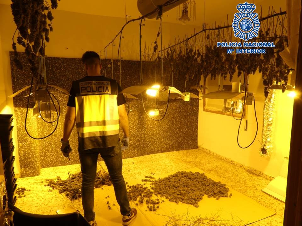 La Policía Nacional desmantela un punto de venta de marihuana e interviene más de 700 plantas