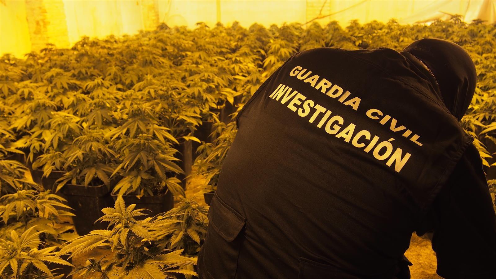 Incautadas 742 plantas de marihuana en una operación antidroga en Dúrcal
