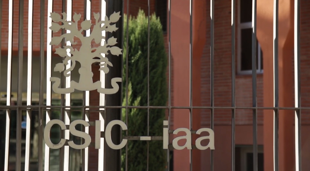 El Instituto de Astrofísica de Andalucía, premio 'Granada Ciudad de la Ciencia 2019' a la excelencia investigadora