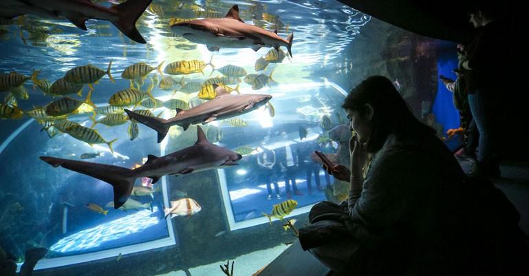 Educación mantiene que no habrá cambios en la gestión del Parque de las Ciencias