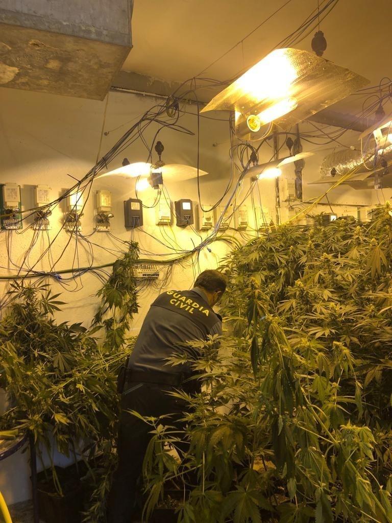 Cuatro detenidos y tres mil plantas de marihuana decomisadas en operaciones antidroga en el cinturón