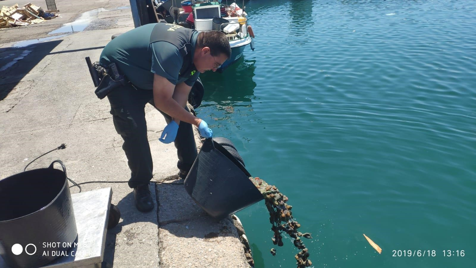 Intervenidos casi 200 kilos de anémonas de mar
