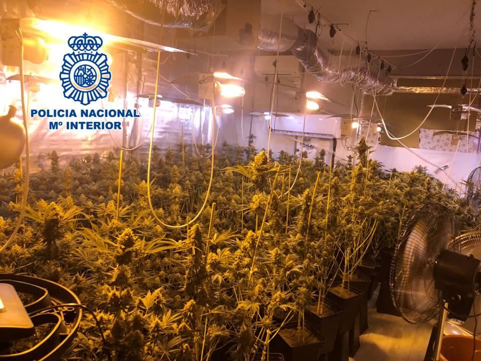 Dos detenidos y 265 plantas de marihuana incautadas en una operación antidroga en Padul