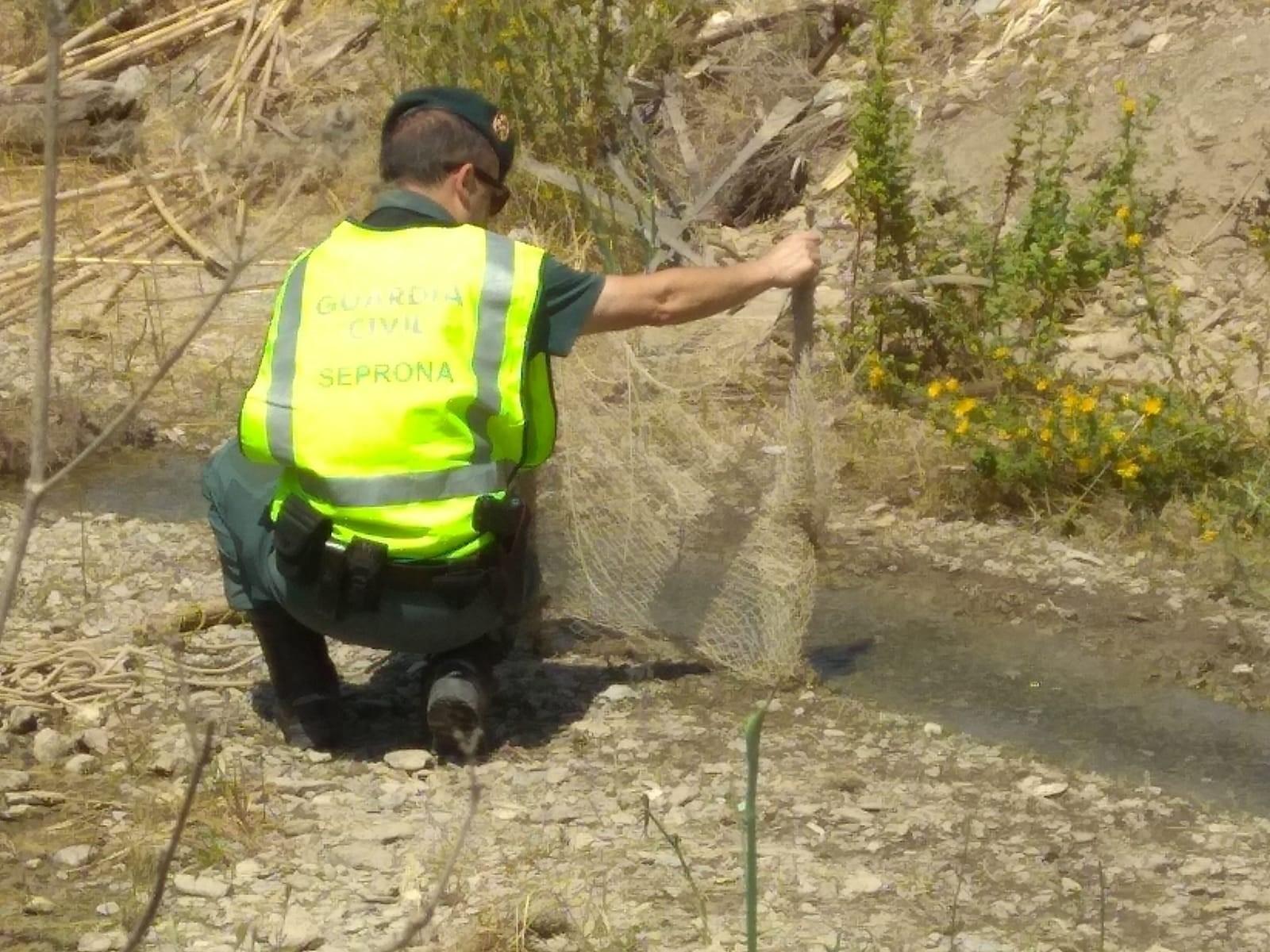 Detenido en Almuñecar tras hurtar presuntamente 700 kilos de mangos