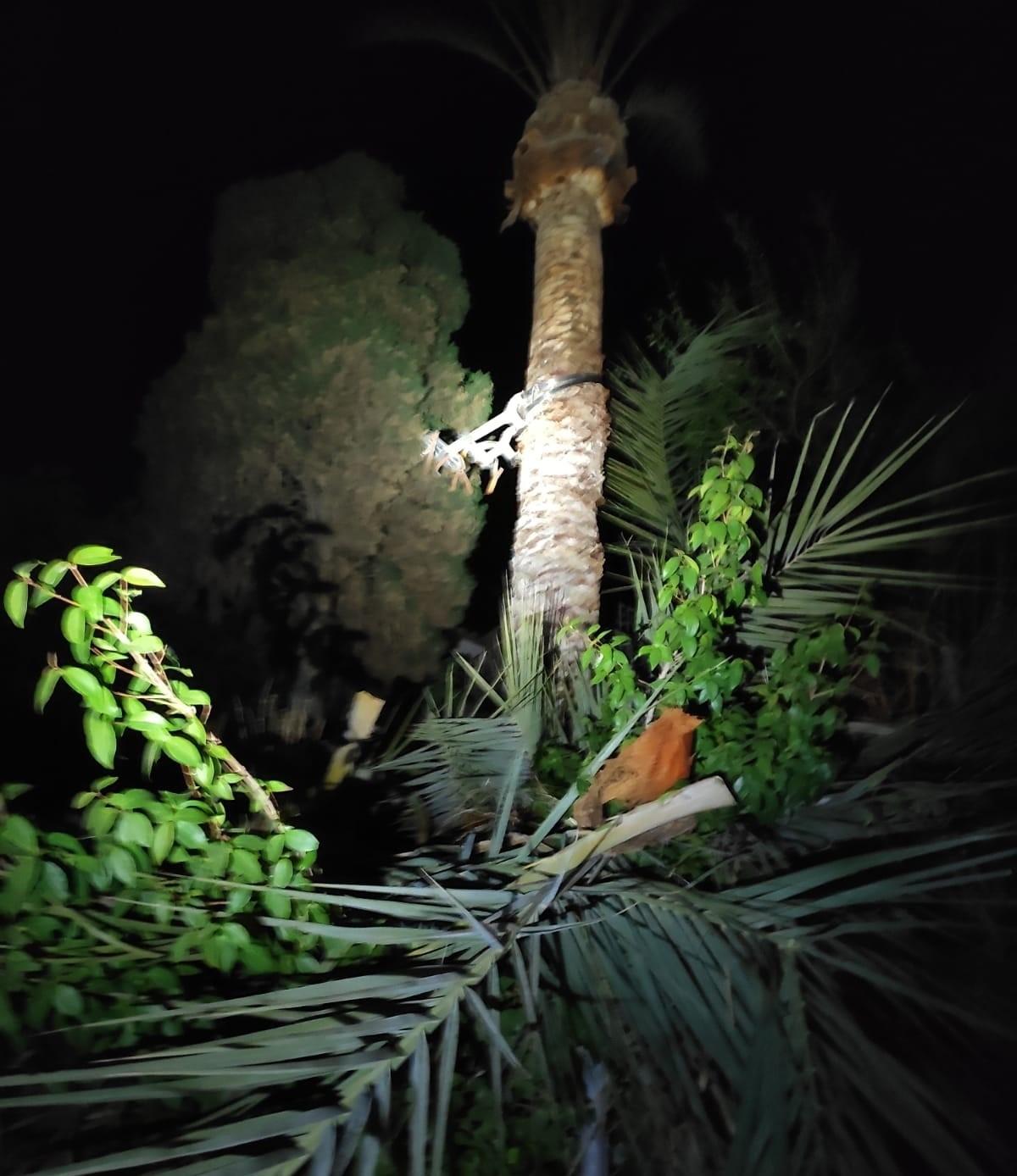 Rescatado tras quedar colgado boca abajo a seis metros de altura cuando limpiaba una palmera