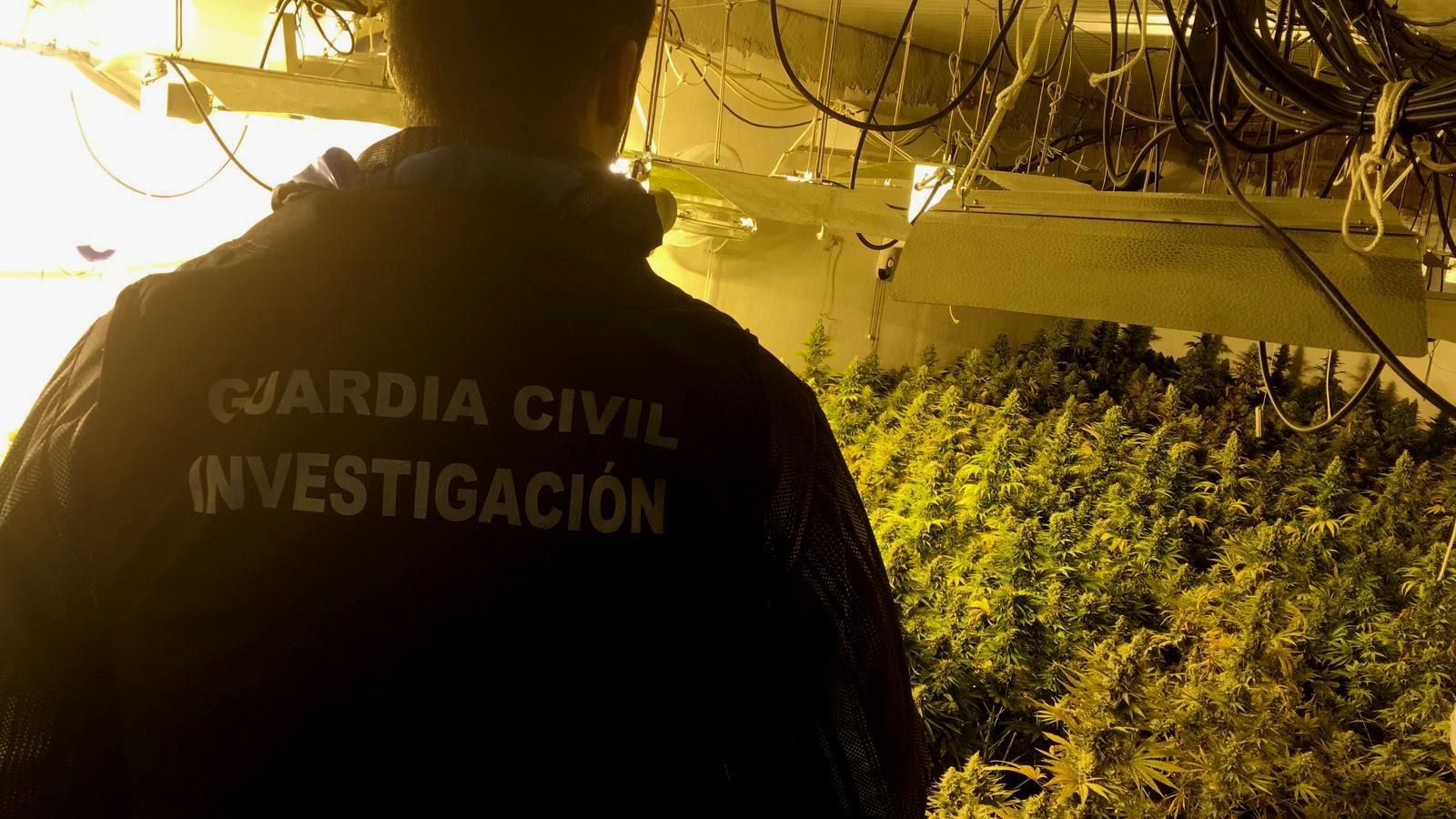 Dos investigados y 1.200 plantas de marihuana intervenidas en una operación en Santa Fe