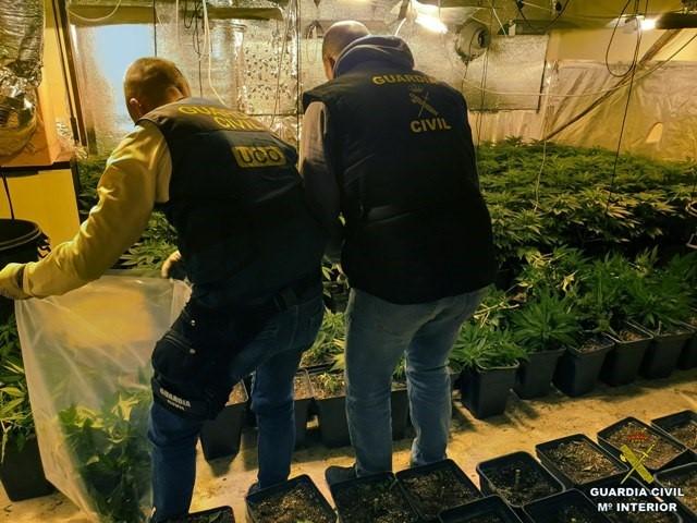 Intervenidas 1.590 plantas de marihuana en Santa Fe y Purullena