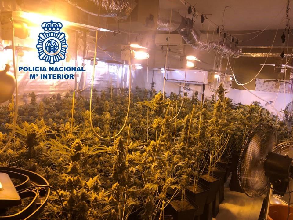 Desmantelada una plantación de marihuana en Huétor Vega gracias a la colaboración ciudadana