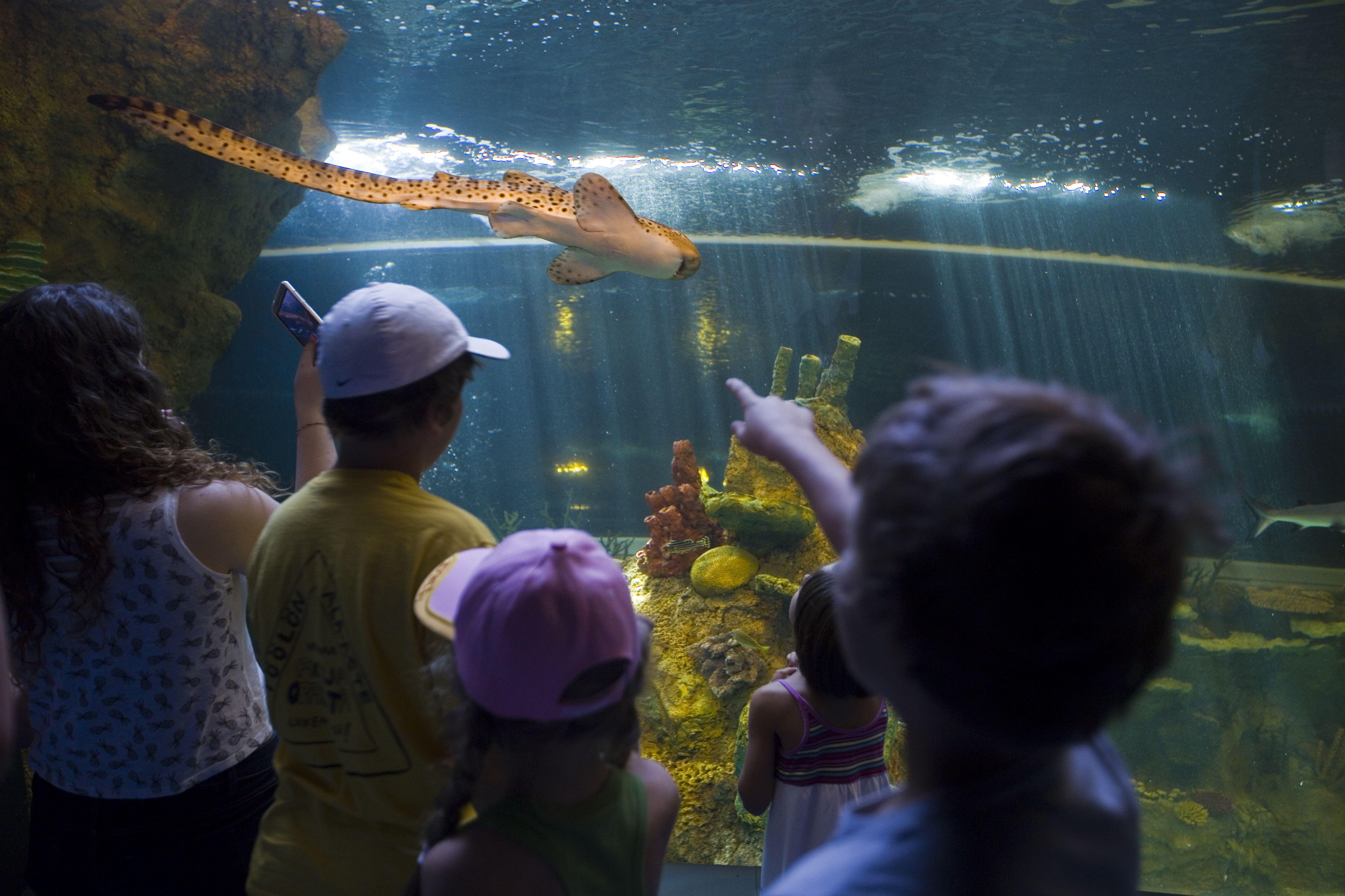 Visitantes de más de 50 países eligen el Parque de las Ciencias como destino este verano