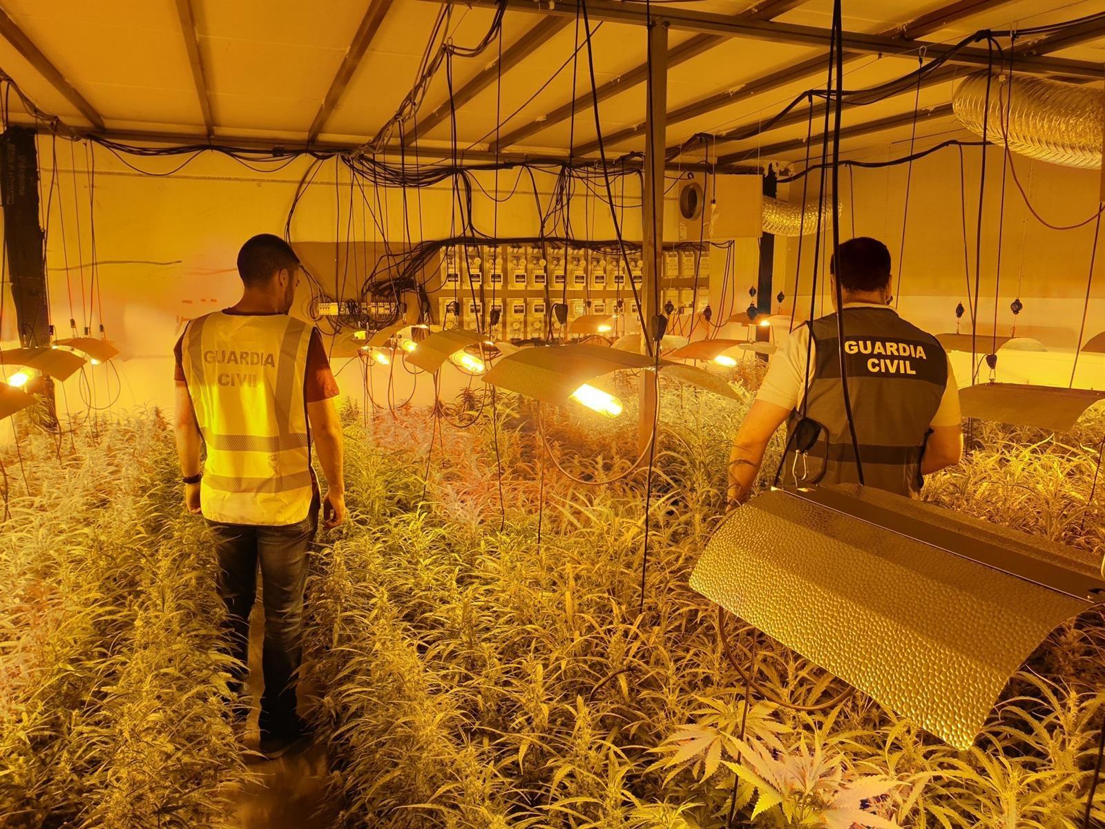 Desmantelado uno de los mayores centros de producción de marihuana de la provincia