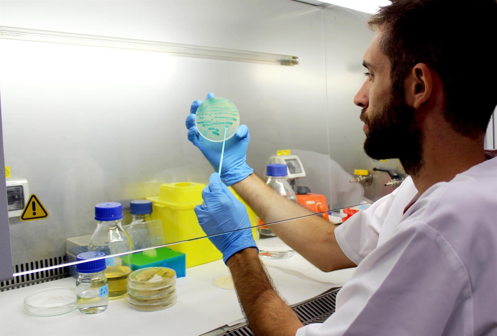 Investigadores de la UGR descubren nuevos compuestos naturales para combatir la listeria