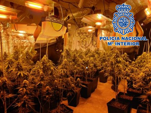 Cinco detenidos en el desmantelamiento de dos plantaciones de marihuana