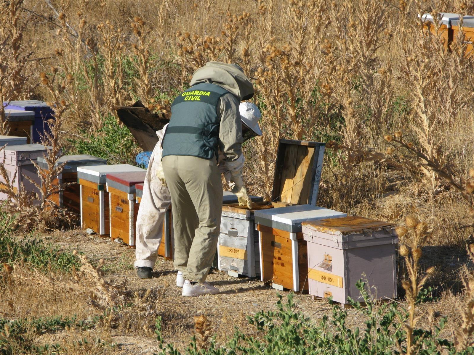 La Guardia Civil investiga a un individuo por el robo de 58 colmenas