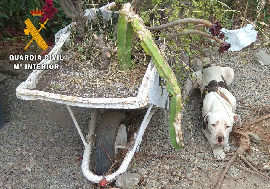 Tres investigados por el abandono de un perro en Almuñécar tras la separación de una pareja