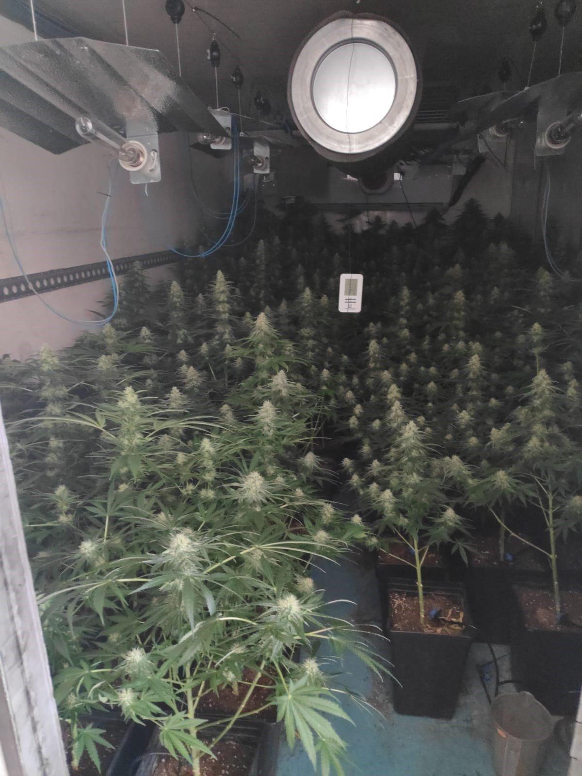 Huye de unos agentes y les conduce hasta la nave donde tenía 123 plantas de marihuana