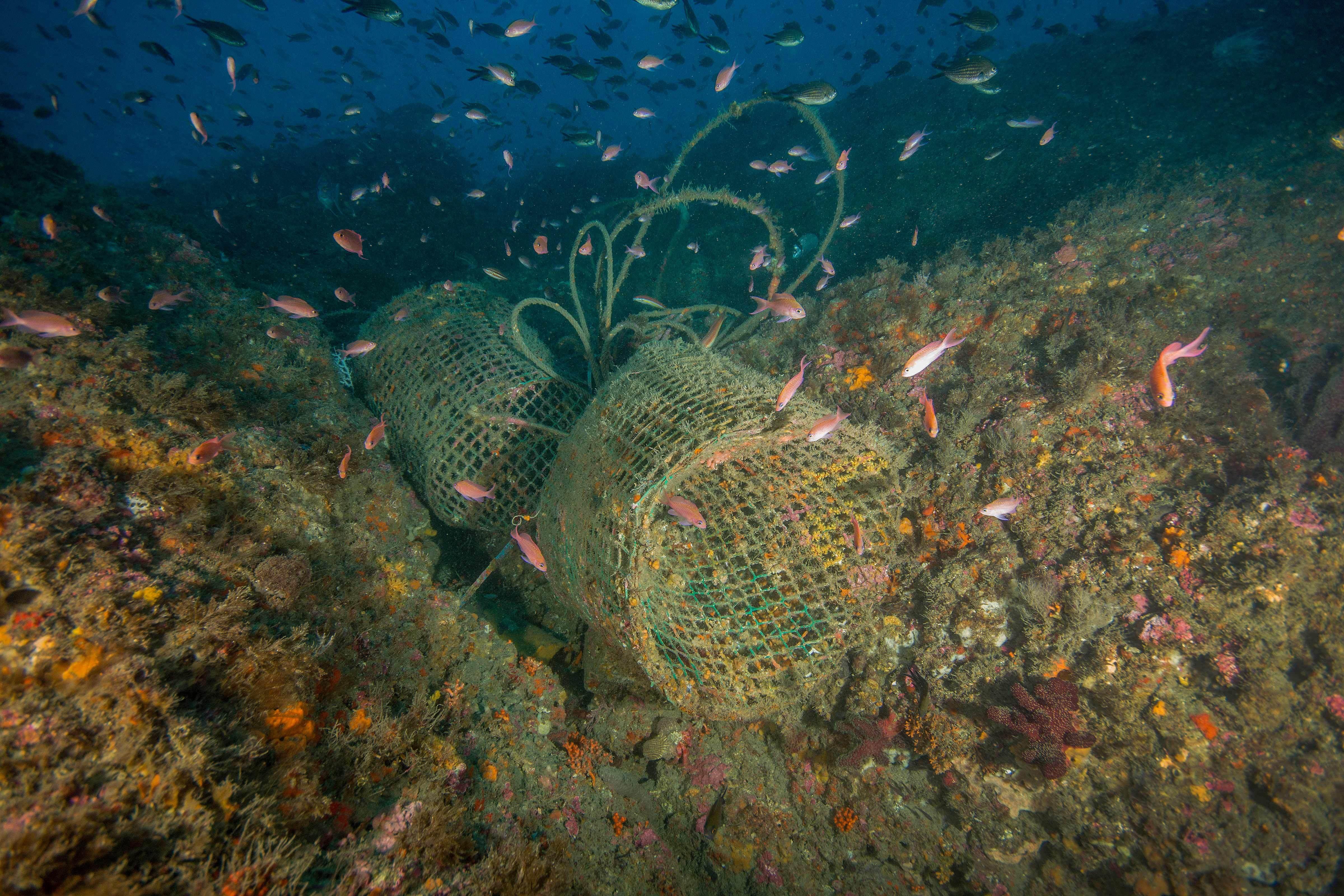 La pesca y la caza submarina destruyen Zonas de Especial Conservación del litoral granadino