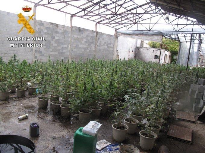 Detenido por cultivar 485 plantas de Marihuana en Alhendín