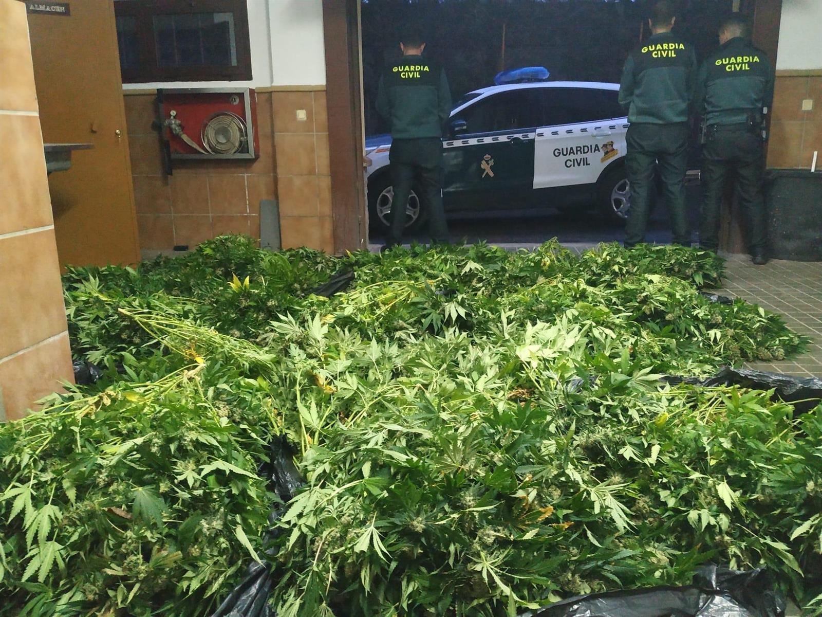 Intervenidas 900 plantas de cannabis sativa en Huétor Vega y Fuente Vaqueros