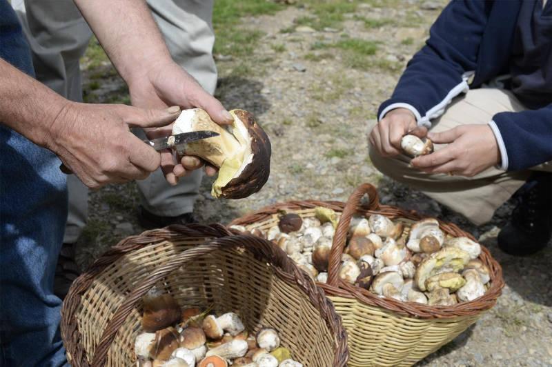 Jornadas micológicas en dos parque naturales de Granada
