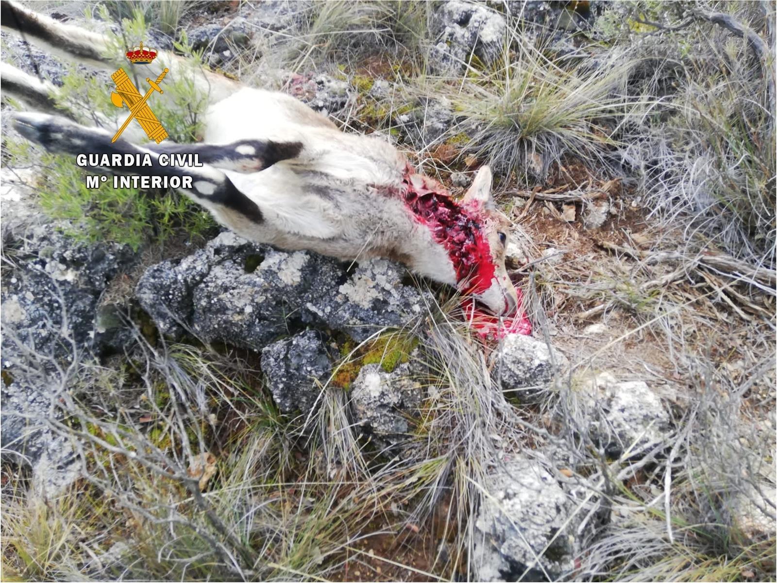 Investigado por cazar dos cabras sin autorización en un coto en El Pinar