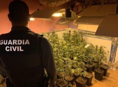 Incautan 544 plantas de marihuana en Santa Fe