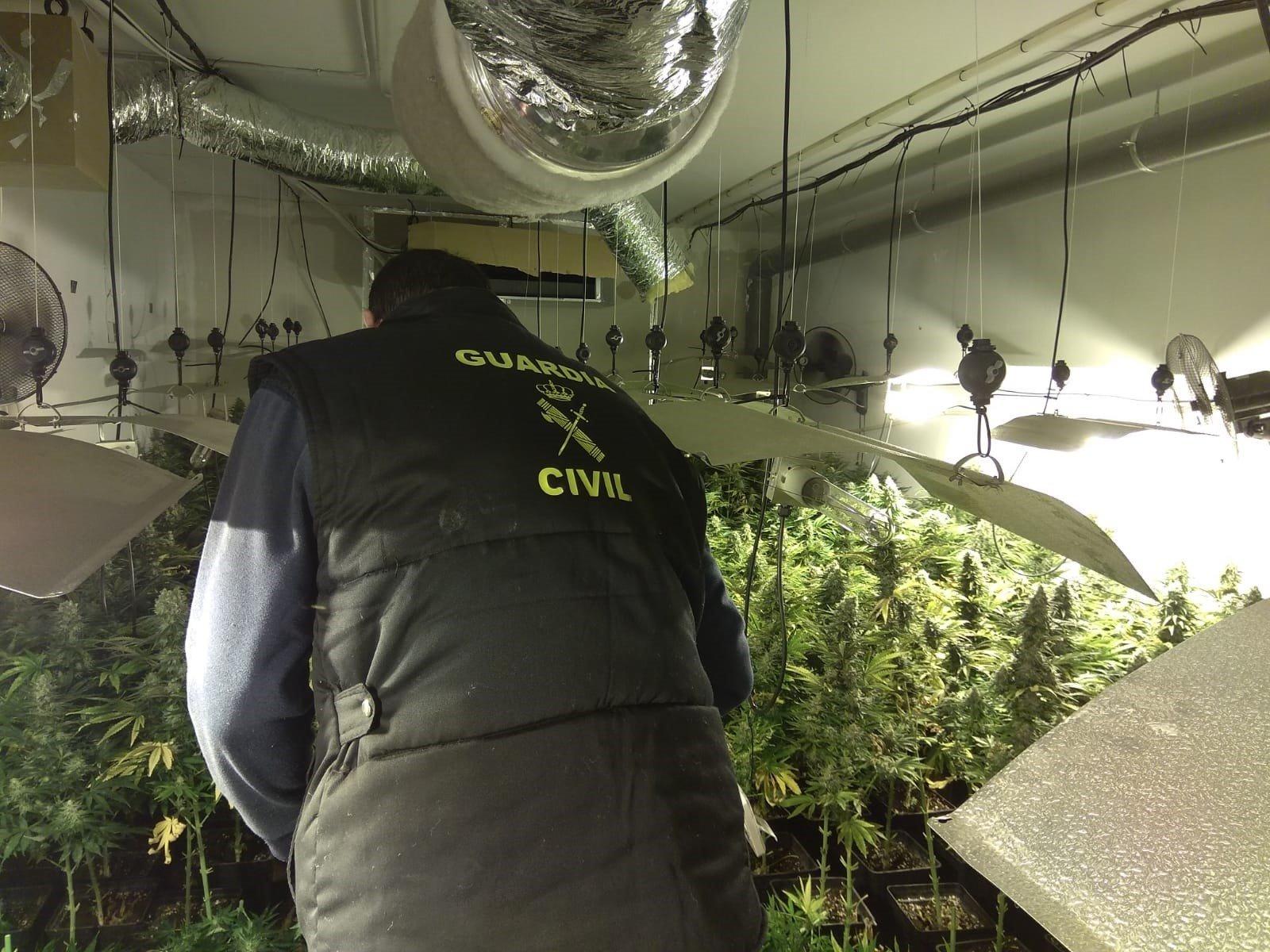 6 detenidos y más de 1.250 plantas de marihuana intervenidas en registros en Santa Fe y Láchar