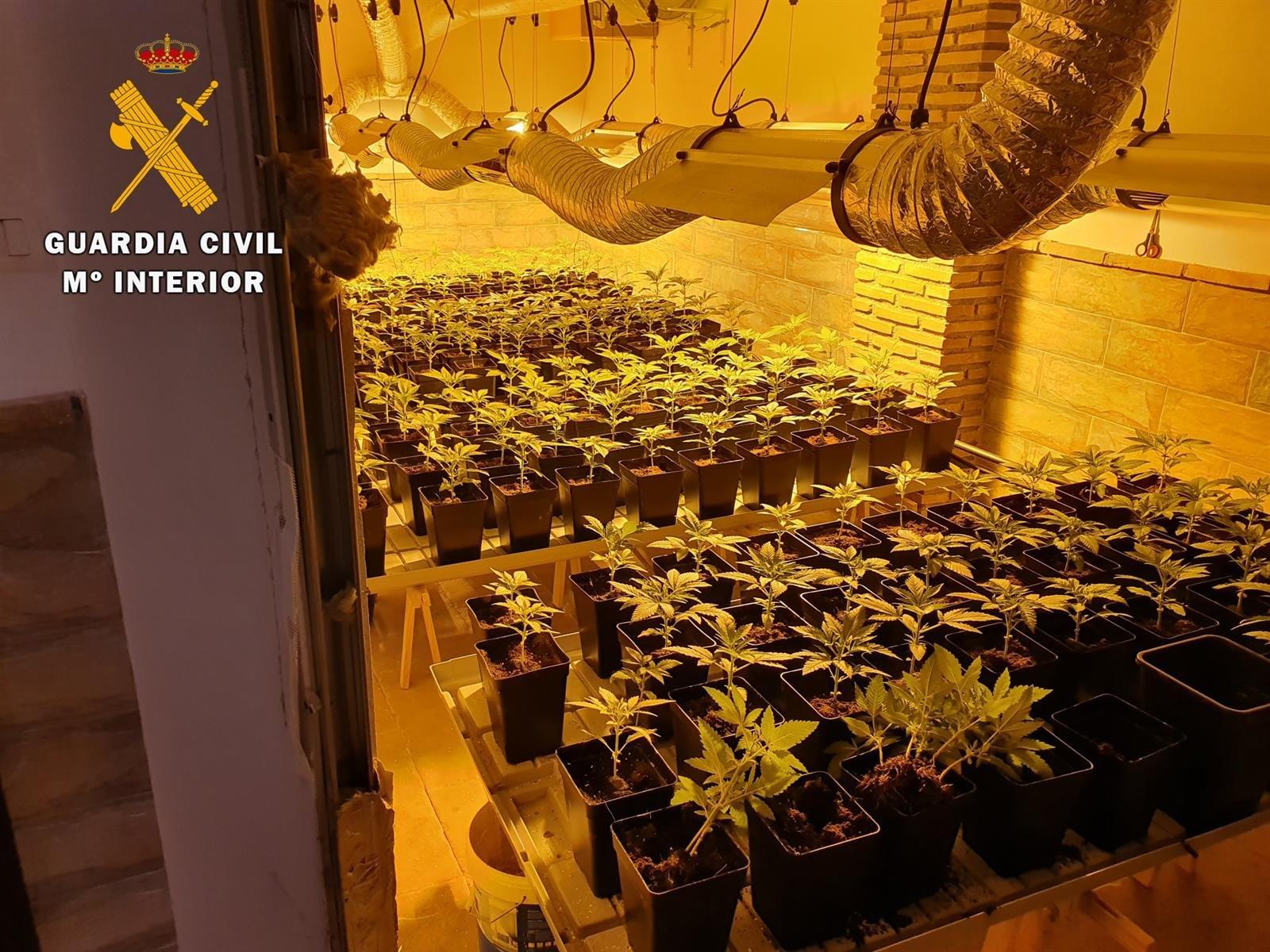 Descubiertas 1.540 plantas de marihuana en Santa Fe al investigar un robo en unas oficinas