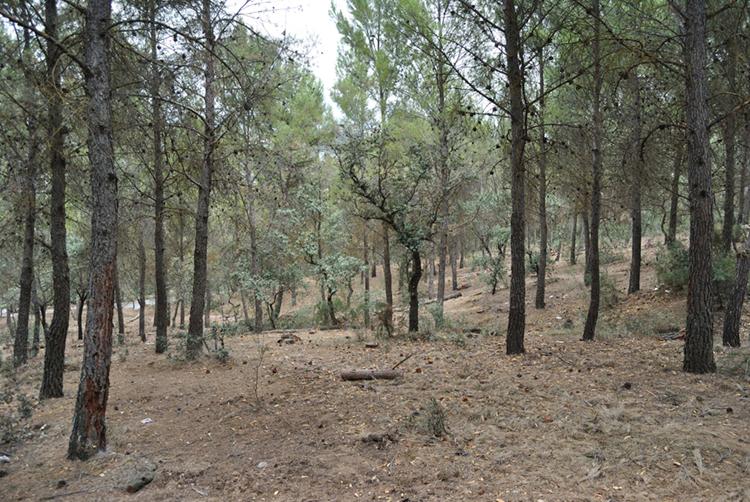 La Junta realiza ocho proyectos de tratamientos silvícolas preventivos en zonas forestales