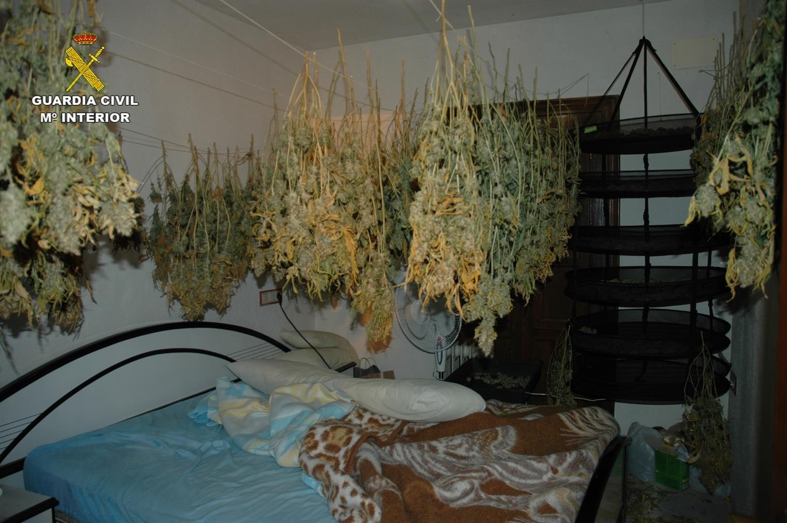 Secaba 150 plantas de marihuana en su casa de Santa Fe