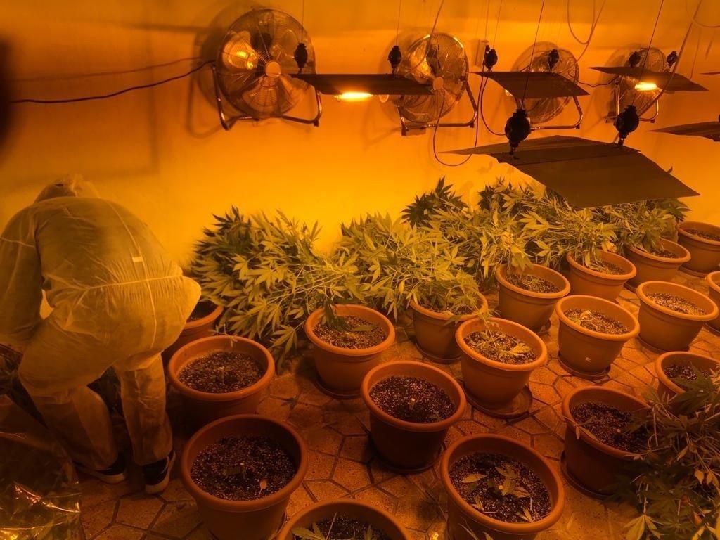 Incautadas 35 plantas y 1,4 kilos de marihuana en Monachil