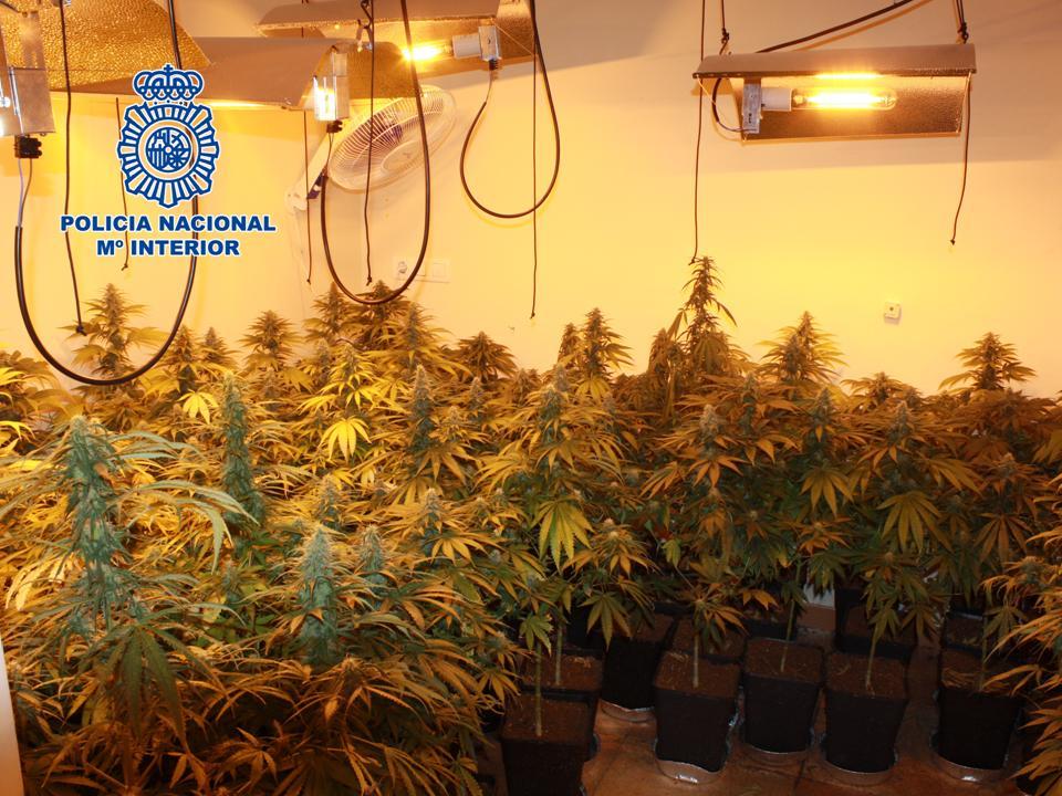 Detenido por cultivar 210 plantas de marihuana en una casa de Cijuela y por agredir a un agente