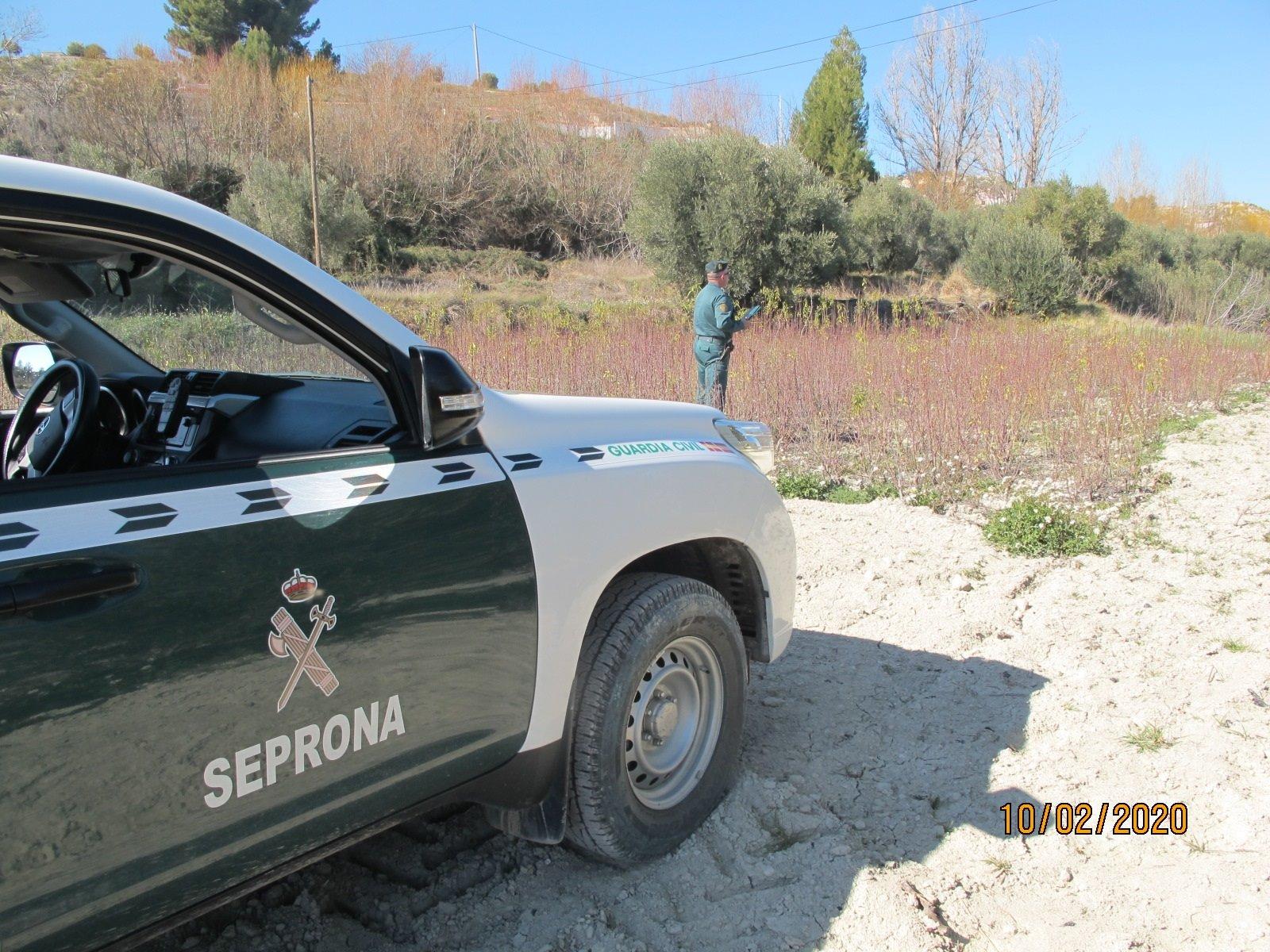 Dos investigados por pescar de forma ilegal 55 kilos de anémonas en el mar de Almuñécar