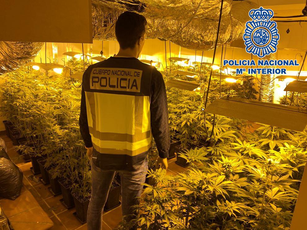 La Policía Nacional desmantela otra plantación ilegal masiva de marihuana en Granada