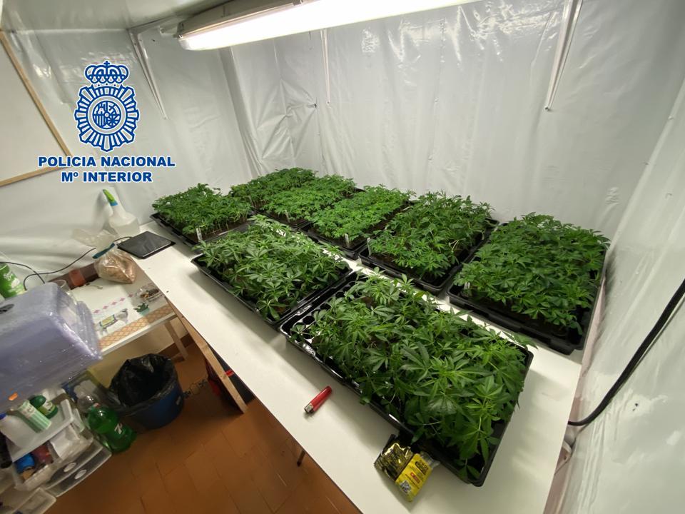 La Policía Nacional desmantela una plantación ilegal de marihuana en una vivienda de Motril