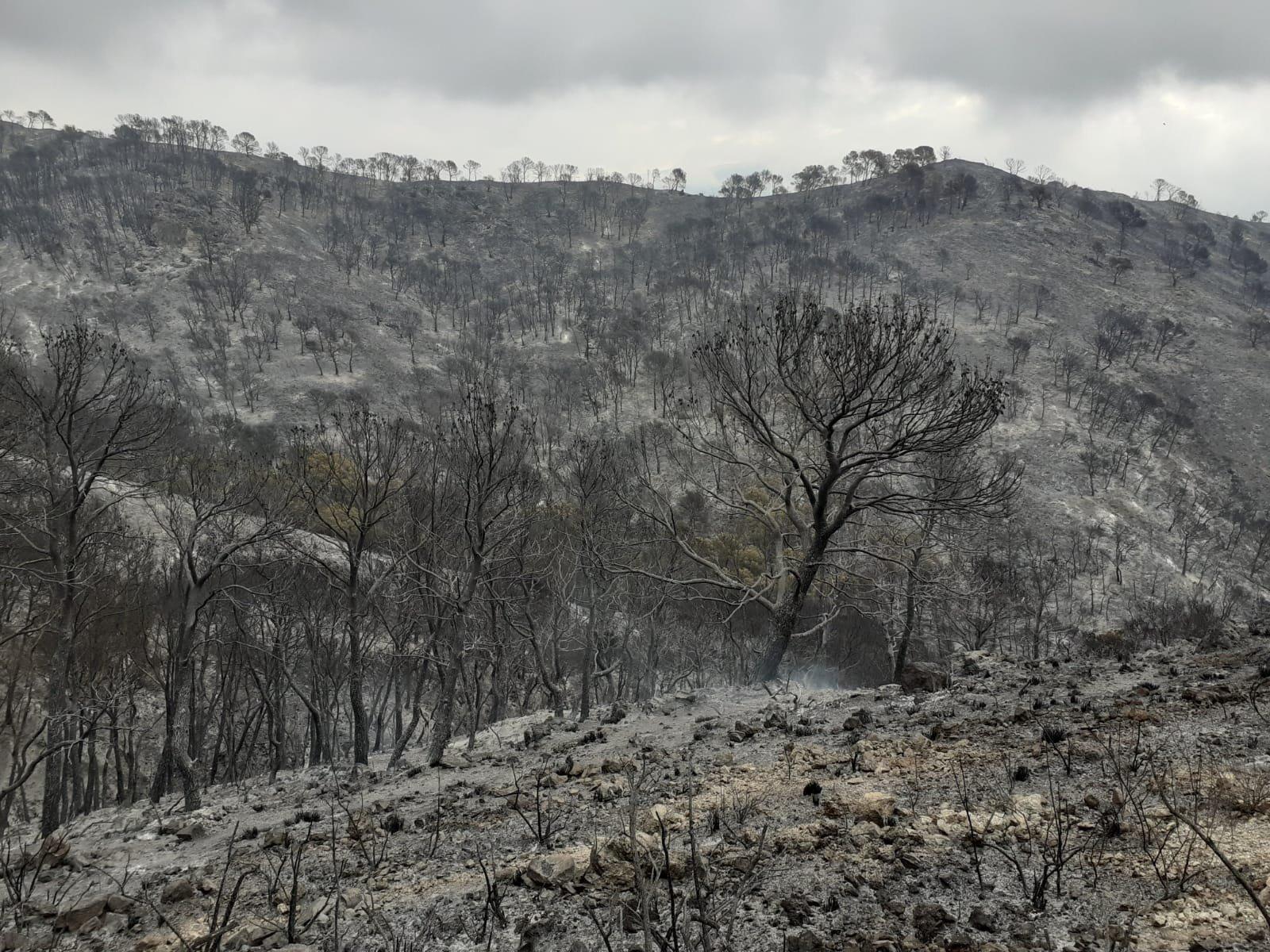 Infoca logra estabilizar la reactivación del incendio en Vélez de Benaudalla