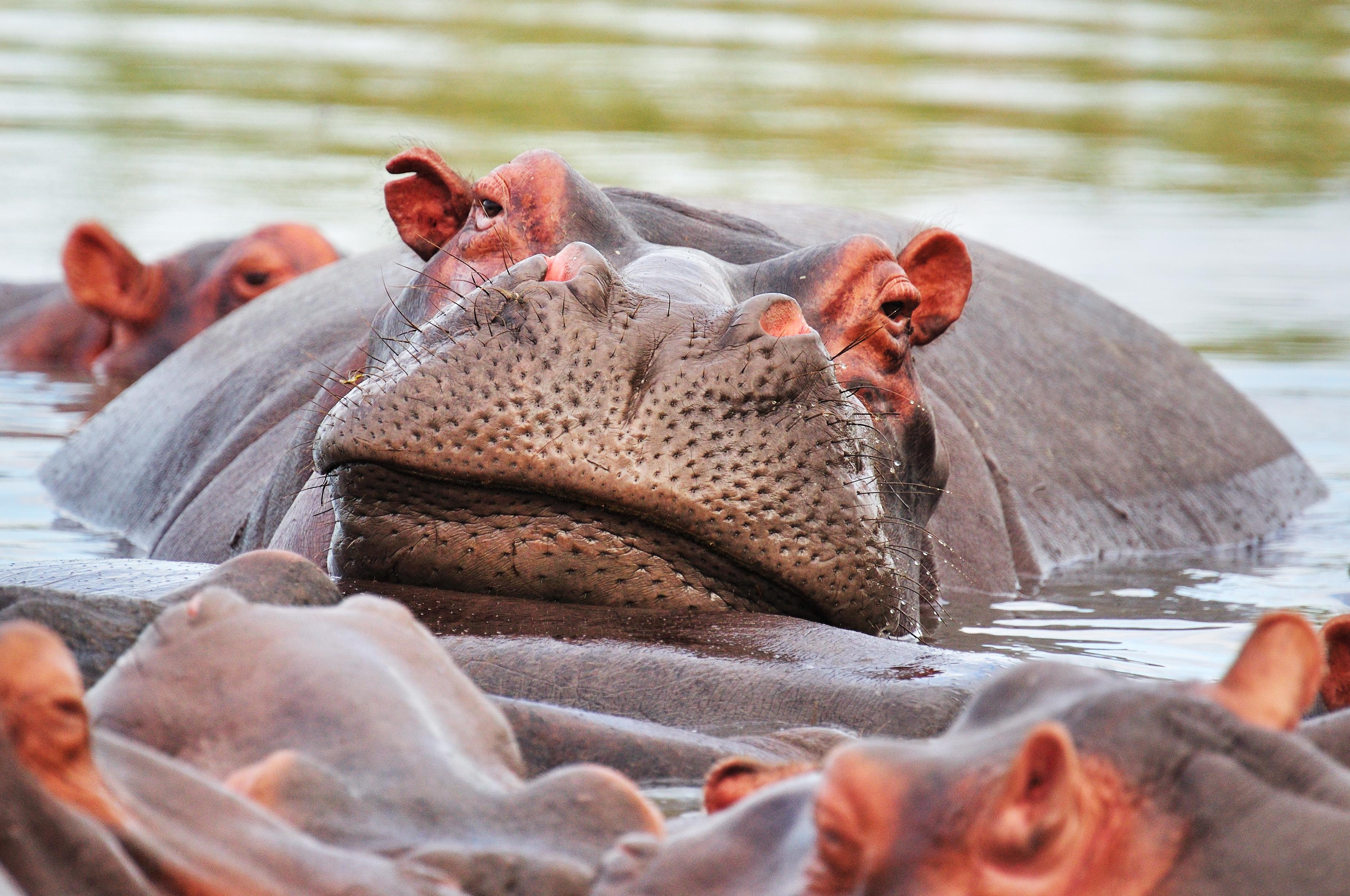 Un equipo internacional de científicos define por primera vez qué es exactamente la 'megafauna'