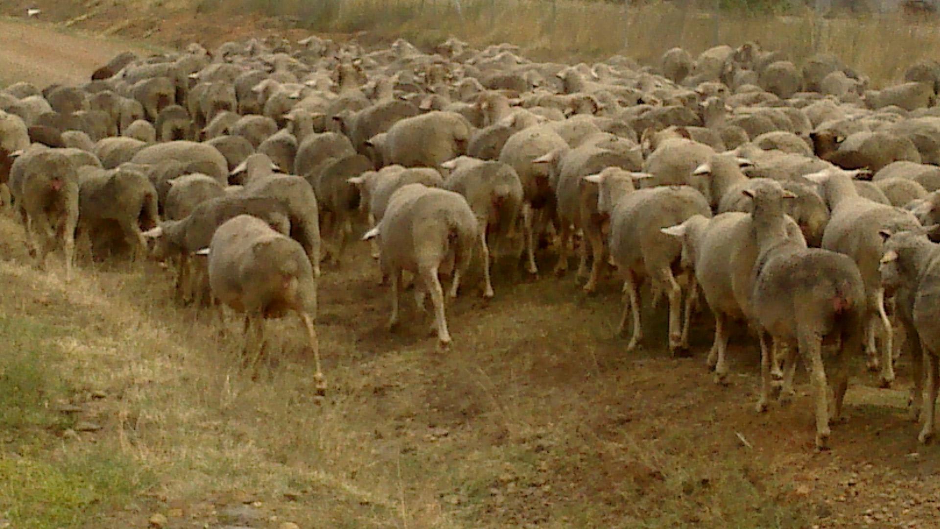 Asaja denuncia «la ruina» a la que enfrentan los agricultores y ganaderos por la bajada de ventas y el «hundimiento de precios»