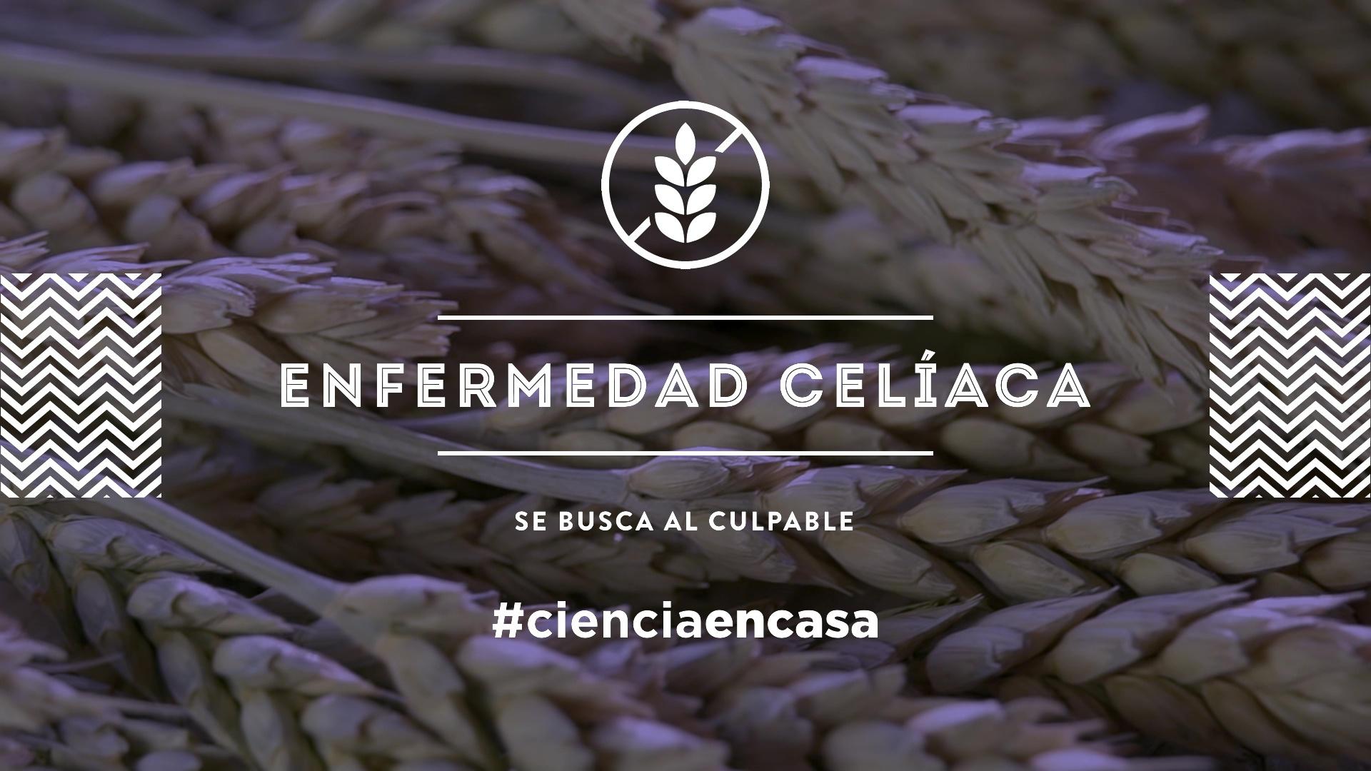 """#CienciaEnCasa: """"Enfermedad celíaca: se busca al culpable"""", por Teresa Nestares"""