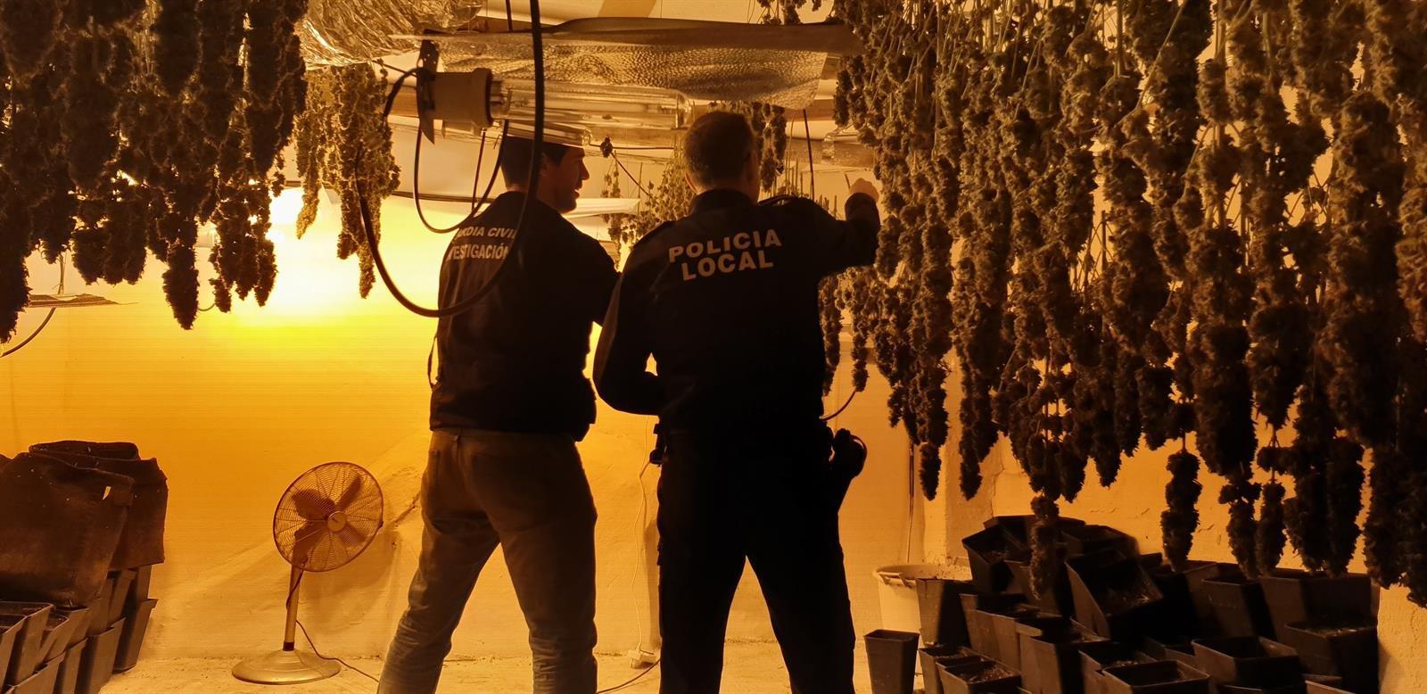 Desmanteladas tres plantaciones de marihuana tras un incendio por enganches ilegales en Santa Fe