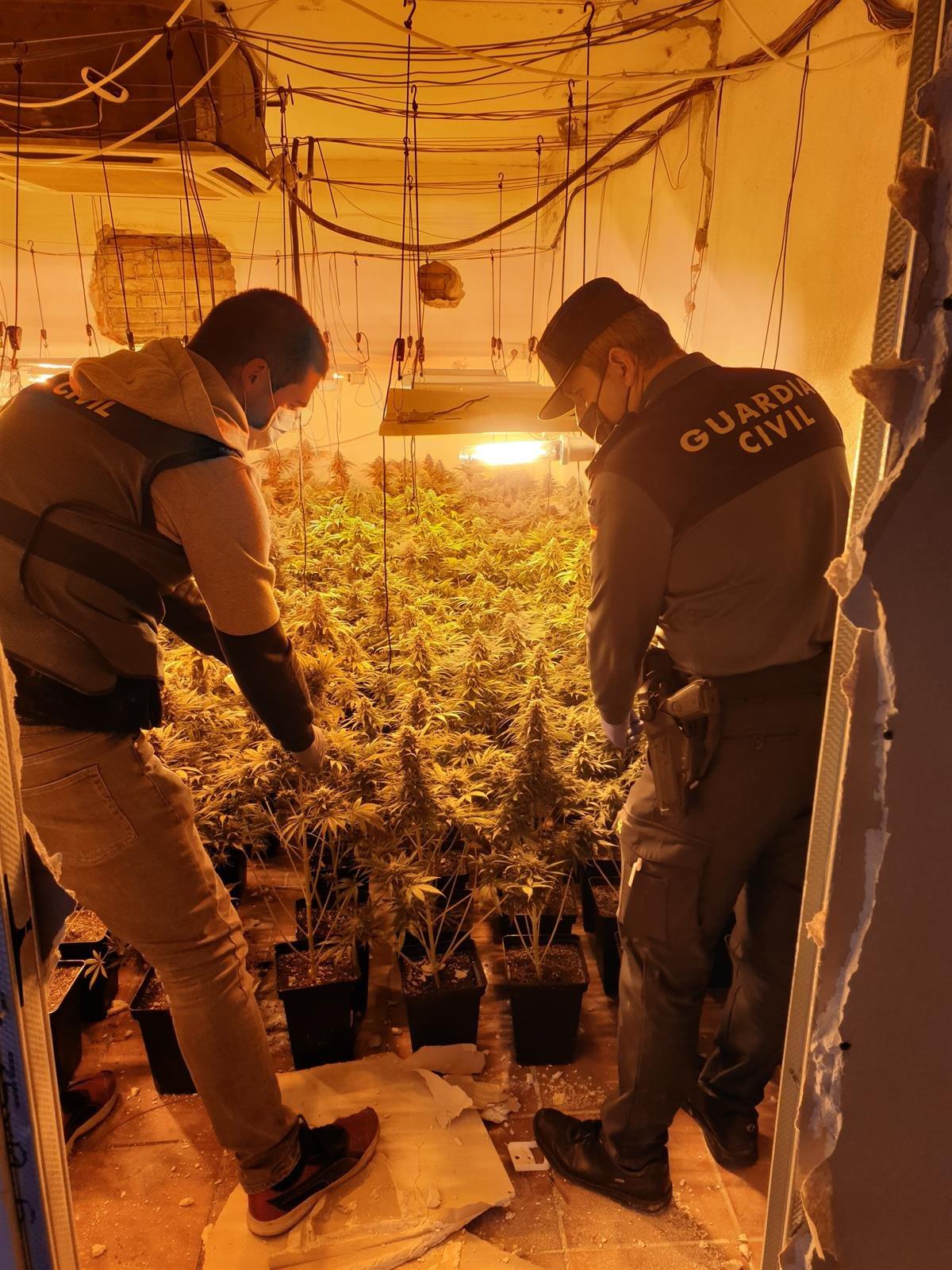 Desmantelan nueve centros de producción de marihuana con más de mil plantas en Fuente Vaqueros