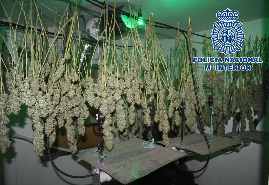 Descubren un cultivo interior de marihuana tras el fallecimiento de una mujer a la que habrían trasladado hasta la calle ya sin vida
