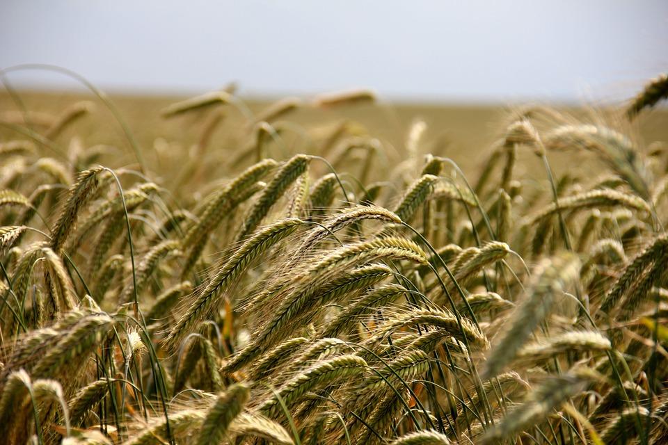 Asaja lamenta que el Gobierno no contemple una reducción de módulos del IRPF para producciones hortícolas