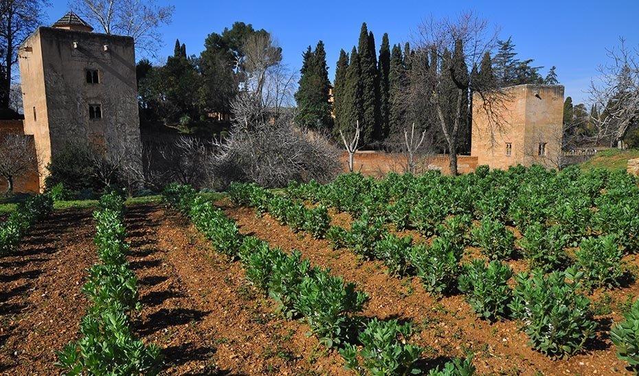Las huertas del Generalife entregan la primera cosecha solidaria de la temporada