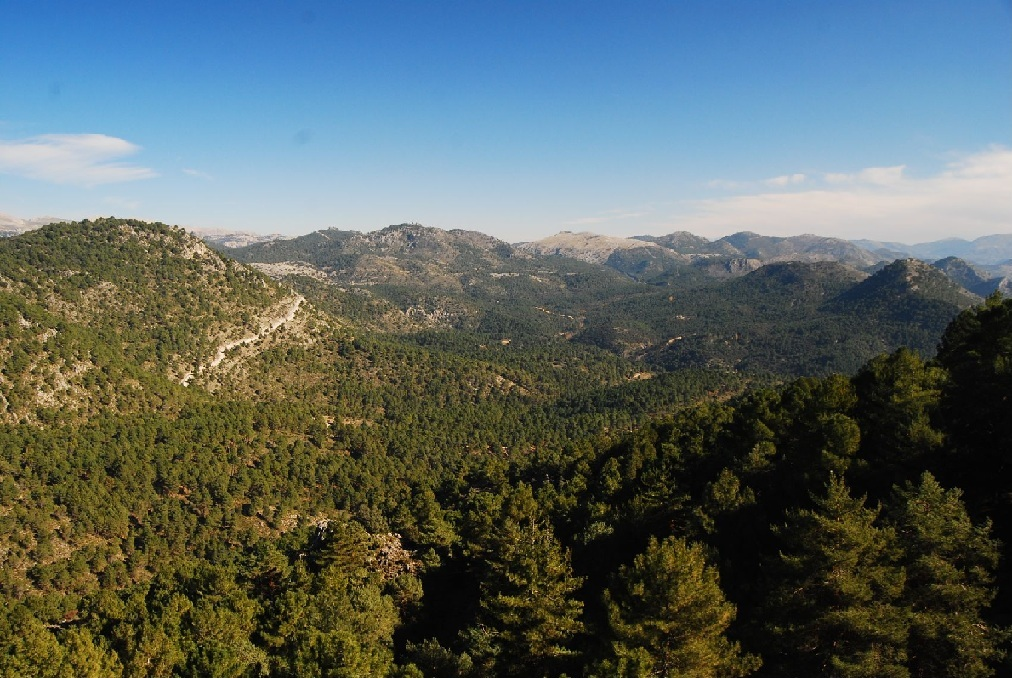Prohibidas desde el lunes las barbacoas y quemas agrícolas en los espacios forestales de Andalucía