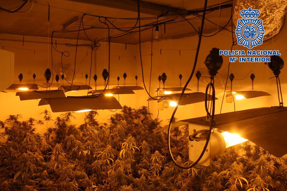 Detenidos dos hombres que cultivaban 519 plantas de marihuana en dos garajes