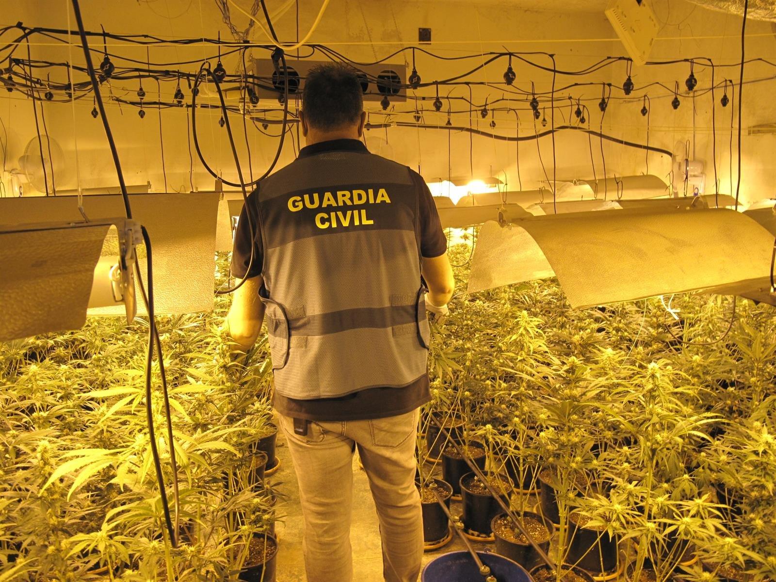 La Guardia Civil se incauta de más de 15.500 plantas de marihuana en julio